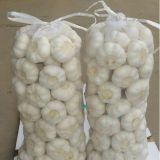 2015 New Crop High Quality Pure White Garlic (6.0cm)