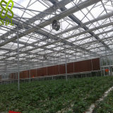 Single Layer PC Sheet Greenhouse for Vegetable