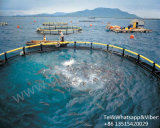 HDPE Floating Fish Cage in Deepsea for Sea Aquaculture