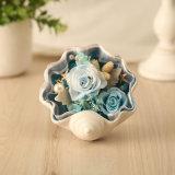 Shell Preserved Fresh Flower for Decoration Gift