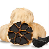 Fermented Single Solo Black Garlic for 90 Days Bulbs (2bulb/bag)