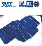 German Quality 6 Inch Poly Solar Cell with Lowest Price
