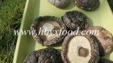 China Hubei Dried Smooth Shiitake Mushroom Dehydrated Food with Different Cap Sizes