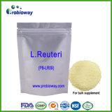 Lactobacillus Reuteri Probiotics Bulk Food Supplements Nutraceuticals