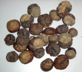 Natural Horse Chestnut Seed Extract,