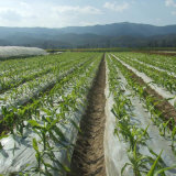 Biodegradable Mulch Film for Agriculture