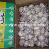 Normal White Garlic (4.5cm, 5.0cm, 5.5cm, 6.0cm)