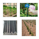 Fiberglass Stake/Plant Stake/Plant Support, Durable, Colorful