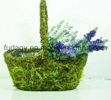 Decorative Oval Moss Planter (Medium)