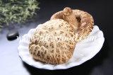 Dried Mushroom, White Flower Shiitake Mushroom