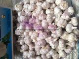 White Garlics