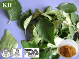 Birch Leaf Extract 10: 1