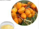 Pure Natural Hippophae Rhamnoides Fruit Extract for Sale