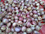 2017 Years New Red Onion Export to MID East