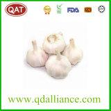 2017 New Crop Normal White Garlic Very Good Price
