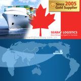 Competitive Ocean / Sea Freight to Canada From China/Tianjin/Qingdao/Shanghai/Ningbo/Xiamen/Shenzhen/Guangzhou