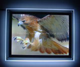 Crystal Wall-Mounted LED Light Box (CSW-P3100914-1)