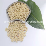 Blanched Peanut Kernels Best Quality and Hot Sell