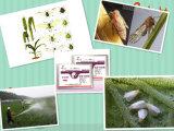 Agricultural Pesticide Pesticide Insecticide Pymetrozine