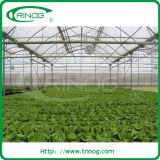 Advanced hydroponics system for water spinach
