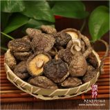 Dried Mushroom (Korean Glossy Surface)