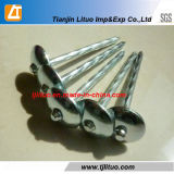 Manufacturer Low Price! Galvanized Umbrella Roofing Nail