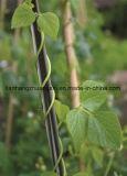 Fiberglass Agricultural Poles, FRP Rod/Pole