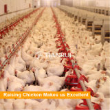 Broiler poultry farm house design/ broiler ground raising equipment
