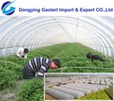 PP Spunbond Nonwoven Fabric Used on Agriculture Protection