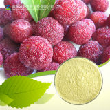Produce Large Quantity Cosmetic Grade Natural 98% Myricitrin
