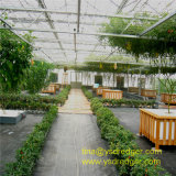 Glass Steel Structure Greenhouse for Restaurant with Best Lighting