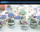 Creative Glass Mason Jar Vase for Succulent Plants Gifts