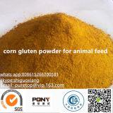 High Quality Corn Gluten Meal Corn Gluten Powder for Chickens