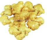 All Year Round Fresh Ginger