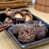 Factory Wholesale Edible Organic Dried Smooth Shiitake Mushroom Healthy Food