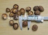 Various Sizes of Good Quality Dried Smooth Shiitake Mushroom