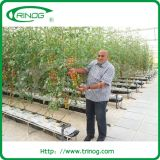 Substrate hydroponic Growing System for Tomato
