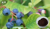 Fighting off Obesity Pterostilbene 20% Blueberry Extract