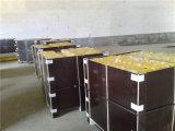 Steel Roller/Conveyor Roller for Export