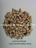 American Round Light Speckled Kidney Bean