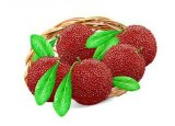 Manufacture with Top Quality Red Bayberry Extract, Arbutus Extract