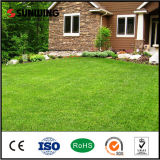 Install Artificial Grass to Roof Garden Lawn for Cricket