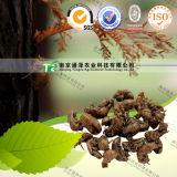 100% Pure Natural Herb Medicine Cicada Ecdysis