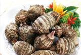 Chinese New Crop Fresh Taro