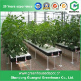 The Cheapest Agricultural Plastic Film Greenhouse with Hydroponics System