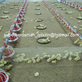 High Quality Automatic Poultry Feeding and Dinking System for Chicken