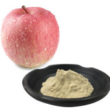 Natural Phloretin Powder HPLC 98% Apple Extract with Best Price