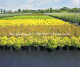 Plastic Woven Weed Control Mat/PP Ground Cover/Black Plastic Ground Cover Price From Chinadurable Weed Barrier