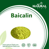 Scutellaria Baicalensis Root Extract Baicalin Powder, Baicalin Extract