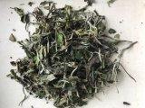 White Peony Tea Leaf 6900 with EU and Us Regulation